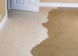 carpet restoration for flood damage in green bay