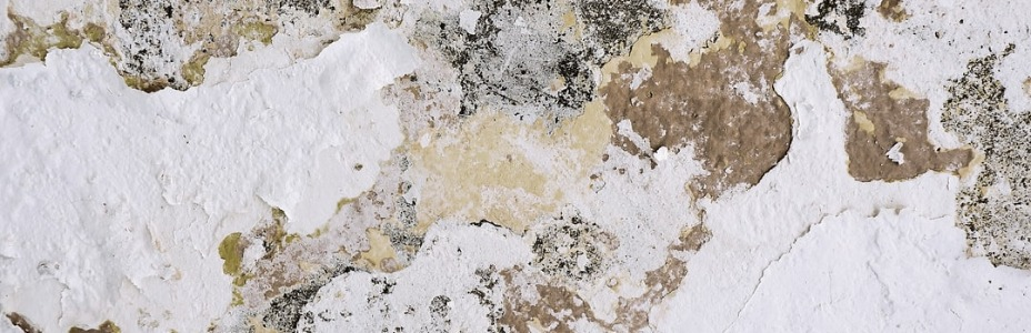 Indications That Your Carpet Has Mold